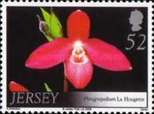 [Orchids, Typ AXO]