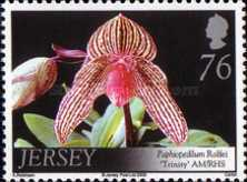 [Orchids, Typ AXQ]