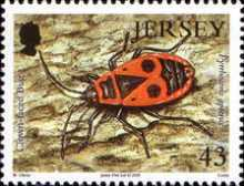 [Insects, Typ AYI]
