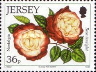 [The 15th Anniversary of the Jersey Festival Rose Show, type BCR]