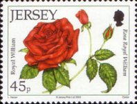 [The 15th Anniversary of the Jersey Festival Rose Show, type BCT]