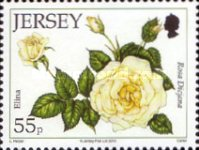 [The 15th Anniversary of the Jersey Festival Rose Show, type BCU]