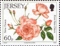 [The 15th Anniversary of the Jersey Festival Rose Show, Typ BCV]
