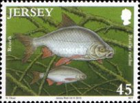 [Fish - The 50th Anniversary of the Jersey Freshwater Angling Association, type BDN]