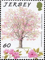 [The 75th Anniversary of Jersey Trees for Life, type BID]