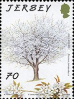 [The 75th Anniversary of Jersey Trees for Life, type BIF]