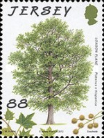 [The 75th Anniversary of Jersey Trees for Life, type BIG]