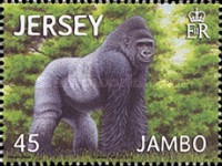 [Jambo - The Gorilla, type BIV]