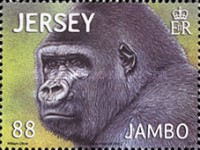 [Jambo - The Gorilla, type BIY]