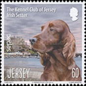 [Dogs - The Kennel Club of Jersey, type BKI]
