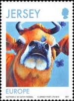 [Jersey Cows, type BML]