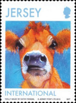 [Jersey Cows, type BMN]