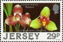 [Jersey Orchids, Typ OE]