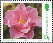 [Flowers - Congress of  The International Camellia Society - Camellia Breeds, Typ YF]