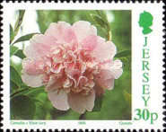 [Flowers - Congress of  The International Camellia Society - Camellia Breeds, type YG]