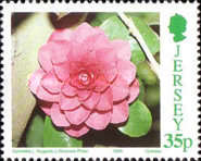 [Flowers - Congress of  The International Camellia Society - Camellia Breeds, type YH]