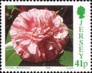 [Flowers - Congress of  The International Camellia Society - Camellia Breeds, Typ YI]
