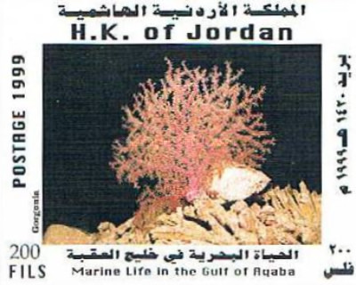 [Marine Life in the Gulf of Aqaba - Corals, type ]