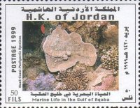 [Marine Life in the Gulf of Aqaba - Corals, type AJC]