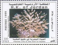 [Marine Life in the Gulf of Aqaba - Corals, type AJD]