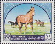 [Arab Horses, type IL]