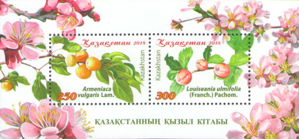 [Flora - Red Book of Kazakhstan, Typ ]