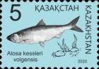 [Definitives - Fish of Kazakhstan, type ANO]