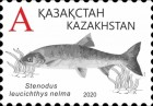 [Definitives - Fish of Kazakhstan, type ANS]