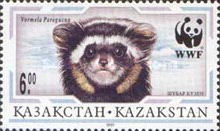 [The Marbled Polecat, Typ DV]