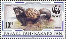 [The Marbled Polecat, Typ DW]