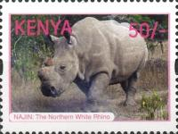 [Northern White Rhinoceros, type AOP]