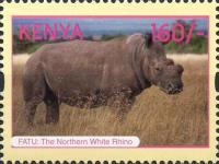 [Northern White Rhinoceros, type AOR]