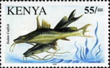 [Fish of Lake Victoria, type XDB]