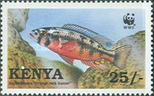 [Worldwide Nature Protection - Lake Victoria Cichlid Fish, type ZY]