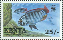 [Worldwide Nature Protection - Lake Victoria Cichlid Fish, type ZZ]
