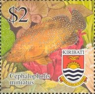 [Tropical Fish, type RR]