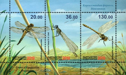 [Insects - Dragonflies, type ]