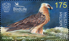 [Bird of the Year - The Bearded Vulture, type AQP]
