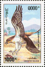 [Birds of Prey, Typ AZW]