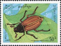 [Insects, Typ BEB]