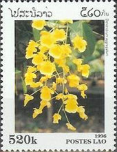 [Orchids, Typ BGE]