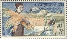 [Rice Cultivation, Typ BN]