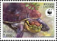 [Worldwide Nature Conservation - Amboina Box Turtle, Typ BVB]