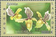 [Flowers - Orchids, type CFY]