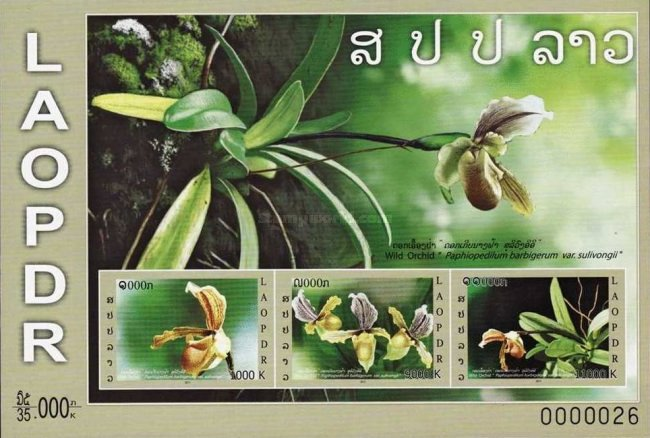 [Flowers - Orchids, Typ CGA1]