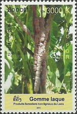 [International Year of Forests, type CGB]