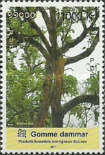 [International Year of Forests, type CGF]