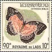 [Butterflies and Moths, type EV]