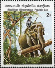 [Indian Elephant, type TE]