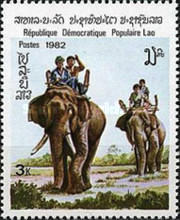 [Indian Elephant, Typ TF]
